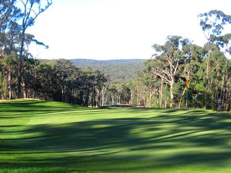 Forest resort golf17