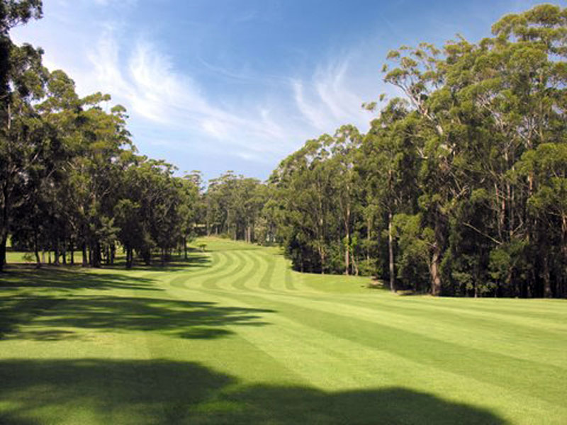 Mollymookgolf13th